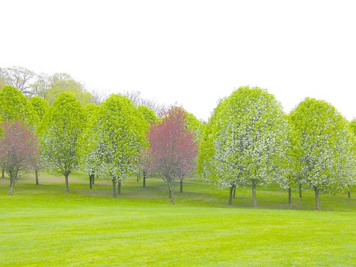 Pretty Spring Trees