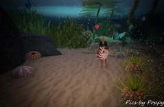 Whimsy-35 (Popis_second_life) Tags: whimsy secondlife