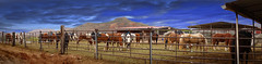17/52 corral (NeilPas) Tags: horses panorama landscape panoramic redrock stable corral 52weeksthe2016edition week172016 weekstartingfridayapril222016