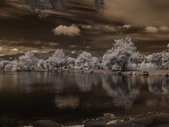 Shoreline With Trees At Santee Lakes (Bill Gracey) Tags: trees sky water clouds reflections ir highcontrast surreal infrared otherworldly santeelakes infraredphotography convertedinfraredcamera