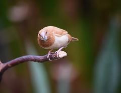 (careth@2012) Tags: bird