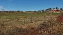 April idyll (cfr-photos) Tags: horses rural fence farm maine pasture pastoral statest orono bucolic carlrella carlfrella