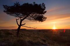 Sunset Terschelling (Rein Teune) Tags: sunset orange holland tree terschelling early nederland boom hee oranje nethelands vroeg zonsopkomst