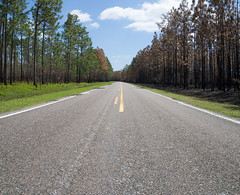 Fire (mikemcnary) Tags: road wood trees sky fire perspective southcarolina charleston burned charred scorched francismarionnationalforest