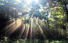 Sunshine Greetings (FlavioSarescia) Tags: travel trees light sun sunlight tree green nature sunshine forest sunrise landscape switzerland explore sunrays landschaft