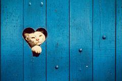 Gatinha do corao (Junior AmoJr) Tags: brazil pet color brasil cat photoshop canon photography photo foto teal gato gata fotografia cor gettyimages lightroom urbanarts creativecloud amojr junioramojrfotografojimdocom wwwjunioramojrfotografojimdocom