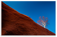 Sandstone and Tree, North Medford (Fundy Rocks) Tags: blue sky sunlight abstract tree sandstone glow novascotia bluesky sandstoneformation northmedford wwwfundyrocksphotographycom