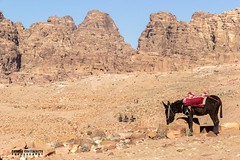 Dryness - Petra, Jordan - Travel photography (carmine.contrafatto) Tags: morning travel light panorama mountains montagne trekking desert hiking stones wadirum petra donkey adventure paesaggi asino giordania    canon600d