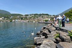 #007 Ascona - Lungolago (Enrico Boggia | Photography) Tags: lago ascona ticino persone svizzera giugno lagomaggiore lungolago verbano cigni 2014 locarnese enricoboggia