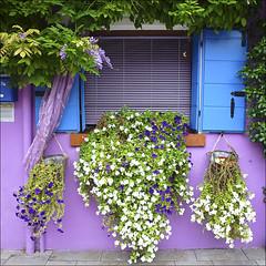 Ventana de Burano (John LaMotte) Tags: venice window ventana italia rosa janela venecia venezia fachada fentre burano infinitexposure