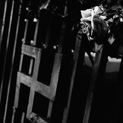 DSCF9524 (koribrus) Tags: blackandwhite bw white black monochrome rose fence garden blackwhite noir fuji cross buddhist swastika buddhism korea fujifilm railing spiritual southkorea blacknwhite healing suncheon xseries jeolla 23mm jeollanamdo vsco vscocam fujix100s x100s koribrus