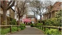 Pierremont Park in Broadstairs (Solne O) Tags: park angleterre sakura arbre parc cerisier alle broadstairs pierremont