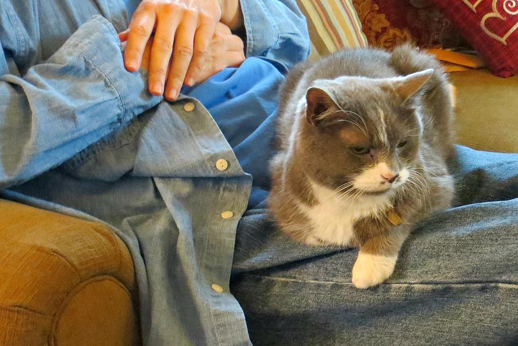 christmas 2015 8144ri 4x6 edgarandron busy tags christmas family cats cute