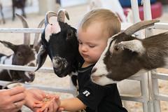 Kids! (Linda Dyer Kennedy) Tags: boy animals kids texas farm statefair humor goats