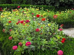 Flowers, flowers (Stella VM) Tags: flowers flower green garden bulgaria balchik