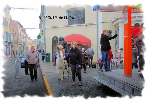 Manège & poneys (7)
