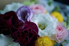 flowers (kenta_sawada6469) Tags: flowers plant flower color colors bouquet arrange