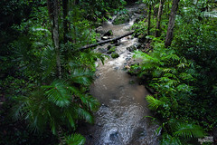 Streaming nature (JamieCN) Tags: travel trees green nature water rain forest port outdoors rainforest stream australia adventure mossman queensland gorge cairns douglas
