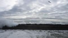 MVI_0892 (ninasprints) Tags: ocean beach hiking palosverdes cabrillobeach koreanfriendshipbell beachviews portuguesebend explorecalifornia latrailhikers