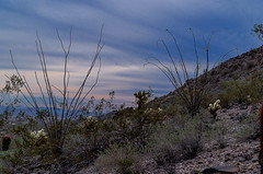At Skyline park on the Turnbuckle trail (utski7) Tags: arizona cactus sky triangles buckeye ocotillo skylinepark studio26 makesagreatfence