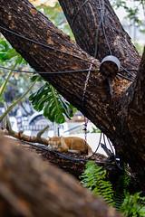 Best place for sleep...Zzzz... (Kantashoothailand) Tags: sleeping cat streetphotography fujifilm meow neko  straycat xt10 xf56mmf12r