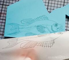 carving_a_fish_stamp4733.jpg (KristinaMariaS) Tags: printing stempel stampcarving handcarvedstamp drucken stempeln amliebstenbunt kristinaschaper