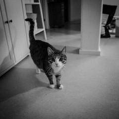 Gief noms! (Mattias Lindgren) Tags: blackandwhite bw cat square noir 365 2016 p16 24mmf28d 24mmf28 project16 nikond600
