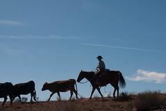 cowboy Washington County 2 13 2016-7943-2 (houstonryan) Tags: ranch art up st print photography cow utah george cowboy photographer cattle ryan houston warner photograph valley round february rancher 13 roundup 2016 utahn houstonryan