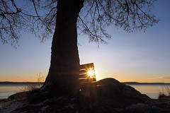 Morning Sun (Jens Haggren) Tags: morning sea sky sun seascape tree water sunrise bench sweden olympus omd em1 hbm nacka