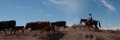 Cowboy Warner Valley 2 13 2016-7927 (houstonryan) Tags: ranch art up st print photography cow utah george cowboy photographer cattle ryan houston warner photograph valley round february rancher 13 roundup 2016 utahn houstonryan