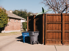Alley Flora (BurlapZack) Tags: fence alley afternoon suburbia neighborhood sidewalk alleyway walkabout americana pointandshoot trashcan banal compact 43 recyclingbin burbs dallastx fakeplastictrees mcmansions pack01 addisontx digitalcompact fauxpalm advancedcompact vscofilm panasoniclumixlx100