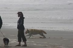 All Photos-9285 (jlh_lunasea) Tags: ocean dog beach romeo manzanita huskador