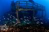 Ark of Jesus Christ (ShaunMYeo) Tags: scubadiving wreck gibraltar wrecks calpe underwaterphotography جبل gibilterra ikelite artificialreef طارق גיברלטר 直布罗陀 гибралтар γιβραλτάρ gibraltár الطارق cebelitarık gjibraltar ĝibraltaro hibraltar xibraltar giobráltar gibraltārs gibraltaras ġibiltà जिब्राल्टर ஜிப்ரால்டர் జిబ్రాల్టర్ ยิบรอลตา جبرالٹر גיבראַלטאַר गिब्राल्टर জিব্রাল্টার 直布羅 陀જીબ્રાલ્ટર ジブラル arkofjesuschrist