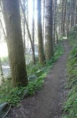 tillamookhike01 (jcravens) Tags: oregon forest hike campground galescreek stateforest tillamookforest
