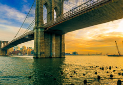 Sunset under the Brooklyn Bridge (Arutemu) Tags: nyc newyorkcity bridge sunset urban usa sun sunlight ny newyork brooklyn america river us view sundown manhattan wideangle american brooklynbridge eastriver vista  riverfront   lowermanhattan ville  nuevayork       americain
