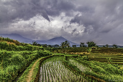 rice field jatiluwih (dargun) Tags: travel bali mountain holiday green nature clouds canon indonesia landscape rice tokina ricefield ricepaddy photooftheday picoftheday jatiluwih balilife balinature canon7d explorebali