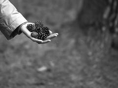 While the ground (dmitry.edich) Tags: bw tree film analog rolleiflex blackwhite leaf spring bokeh moscow ground fujifilm while neopan filmcamera coolscan ilford schneider sinar afi acros 80mm  acros100 filmphotography lc29 xenotar  filmonly filmsnotdead hy6