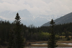 A rainy day in the mountains (davebloggs007) Tags: park canada kananaskis alberta valley bow provincial