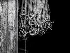 Fishing nets (Kent Vegard Evjen) Tags: wood blackandwhite black net film monochrome norway analog mediumformat dark outdoors fishing board rope 120film medium format 6x45 kodaktmax400 troms fishingnet kodakfilm xtol kodakmoment kvalya scannedfromnegative northernnorway nikoncoolscan9000ed mamiyaafd