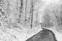 Rail Trail (Grant is a Grant) Tags: ca snow canada spring nikon novascotia snowy ns kitlens 1855mm 1855 annapolisvalley middleton annapoliscounty nikkor1855mm nikond90 vsco vscofilm