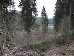 IMG_8802 (Bike and hiker) Tags: ardennen ardennes eifel hellenthal narzissen narcissen oostkantons rocherath olef krinkelt holzwarche jansbach bachtaler