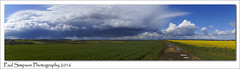 Storm Cloud Panoramic (Paul Simpson Photography) Tags: storm nature rain weather spring stormy lincolnshire naturalbeauty naturalworld stormcloud springtime raincloud yellowfields photosof imageof photoof imagesof photosofnature sonya77 paulsimpsonphotography april2016