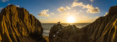 Even Dogs Love Natural Beauty (Fluid Light Images) Tags: sunset dog seascape dogs landscape sandiego sony panoramic adventure sunsetcliffs a7r