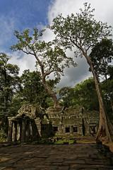 Angkor Wat - Ta Prohm (wolf4max) Tags: architecture temple asien cambodia kambodscha khmer kunst urlaub angkorwat architektur taprohm bauwerk tempel kambodia khmertemple ankorwattaprohm