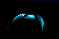 "similandivingsafaris.com:manta ray at night.jpg"" alt=""Manta at Night"" :> (similandivingsafaris) Tags: ocean fish macro water coral thailand aqua scuba diving scubadiving corals khaolak andamansea underwaterphotography liveaboard similanislands kohbon kohtachai dolphinqueen worldfamousrichelieurock similanexplorer"