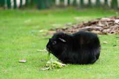 TH20150513A603081 (fotografie-heinrich) Tags: meerschweinchen ostsee zingst erdbeerhof
