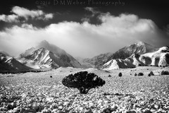 Stolid (DM Weber) Tags: california bw white snow storm black mountains tree monochrome canon landscape mt nevada peak sierra lone morrison eastern laurel clearing eos5dmk2 psa148 dmweber
