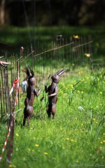 2016_04_10_st_jean_de_beauregar438 (Xavier_Claise) Tags: saint jean bokeh jardin fte horticulture dcoration ouverture plantes 135mm beauregard artisanat 2016 135mmf2 5dmarkiii
