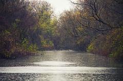 Spring Rains (Matt Champlin) Tags: life home rain canon woodland canal spring rainyday random trail rainy april showers towpath springtime eriecanal 2016 jordanny