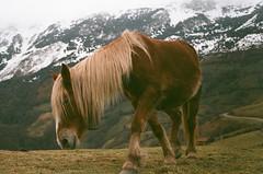 (Romn__PG) Tags: film caballo asturias agfa expired montaa